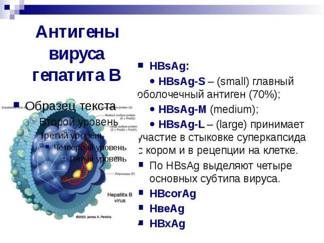 Антигены гепатита В
