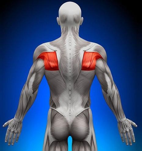 Зоны воздействия при массаже плеч и лопаток