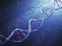 ДНК вирус в крови