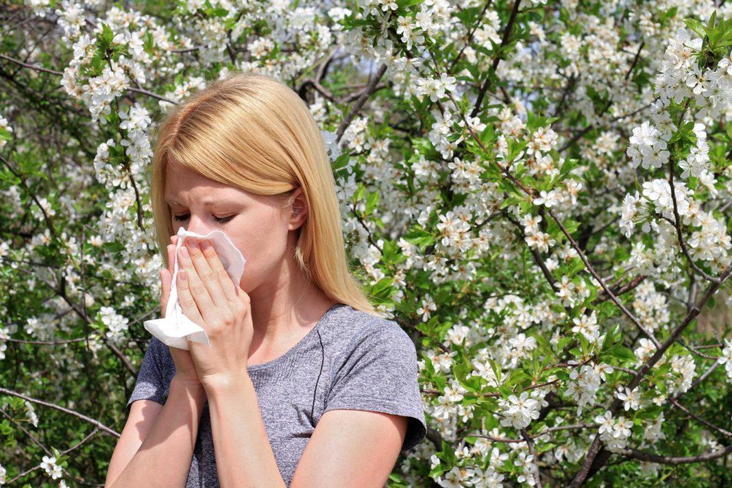 Рост заболеваемости поллинозами вызван климатическими изменениями