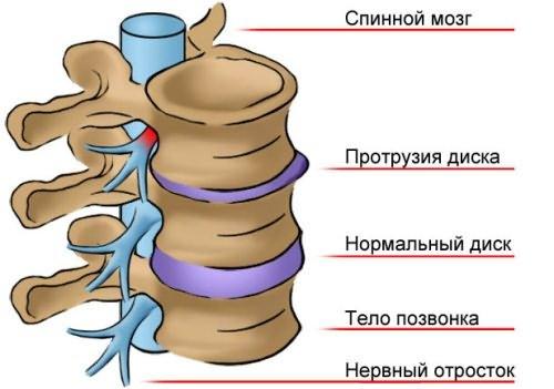 Строение позвоночного канала