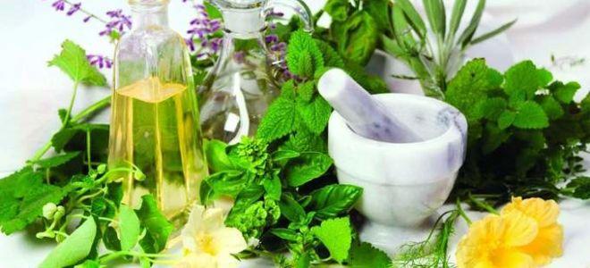 Травы для лечения остеохондроза