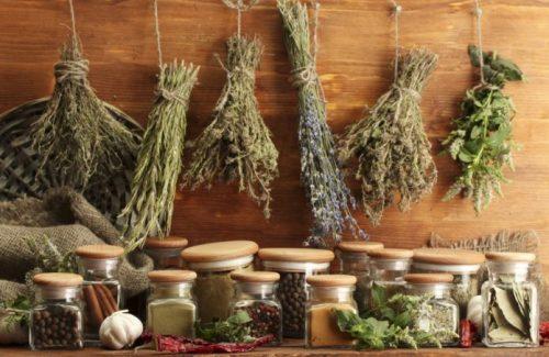 Травы для создания настоек при остеопорозе