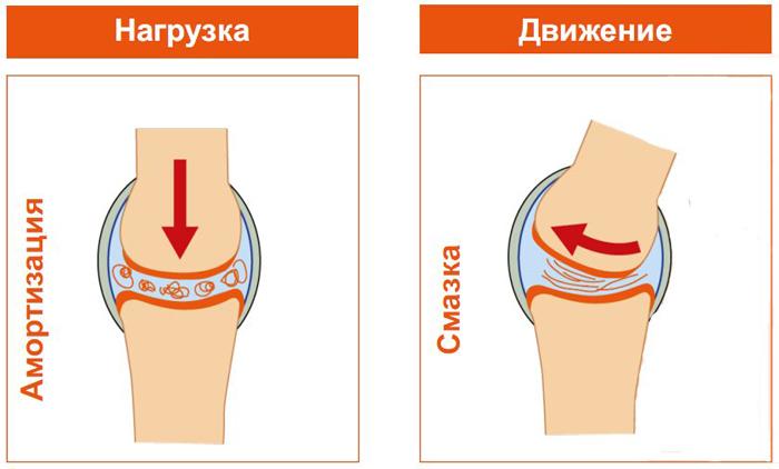 Основными функциями физиологического гиалурона являются смазка суставов и их амортизация