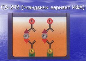 Онкомаркер СА-242