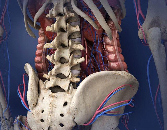 Анатомия поясничного отдела позвоночника