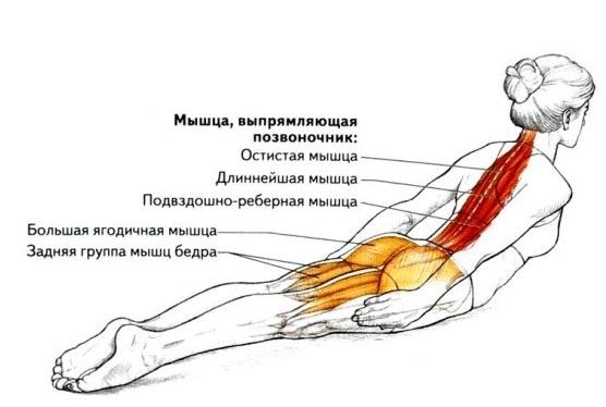 Задействованные при гиперэкстензии мышцы