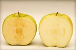 ГМО яблоки, как определить разницу