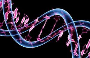 Восстанавливаются ли нервные клетки у человека